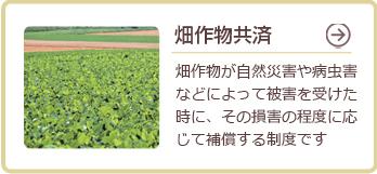 畑作物共済