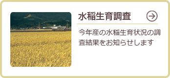 水稲生育調査
