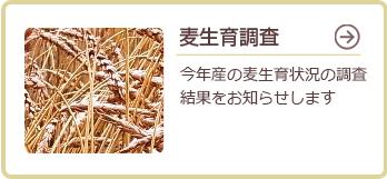 麦生育調査