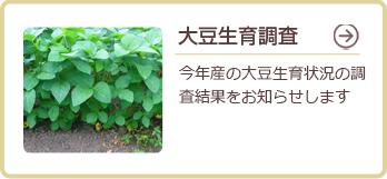 大豆生育調査