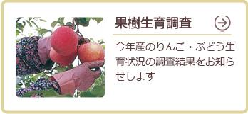 果樹生育調査